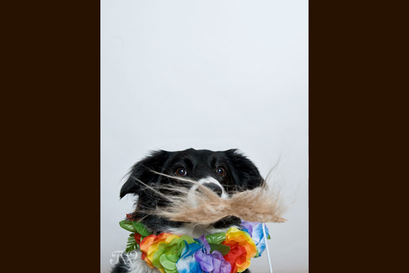 mustache_on_a_stick_calgary_wedding_photo_booth_02